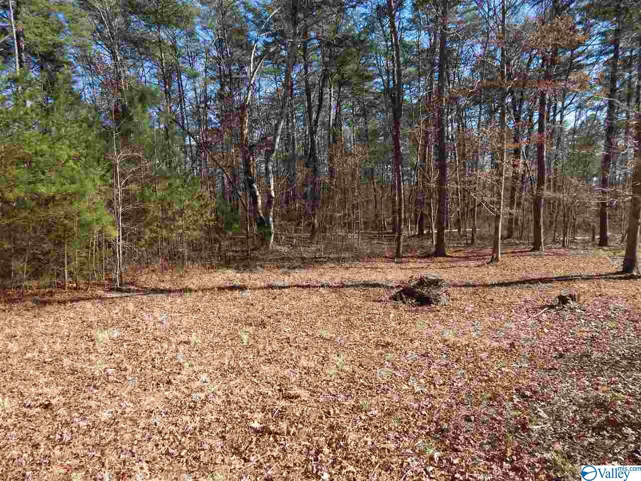 Photo of home for sale at Lot 1 Road 935, Mentone AL
